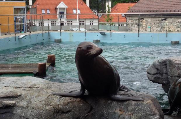 Bergen - Acquario