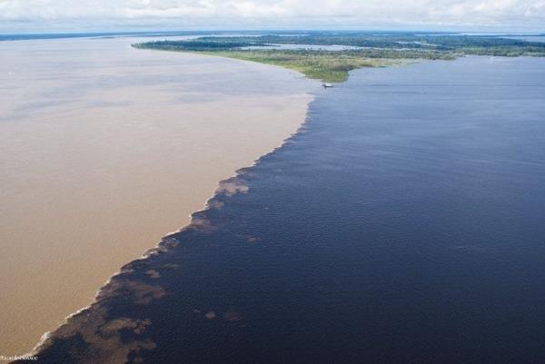fiume rio  negro incontra rio delle amazzoni