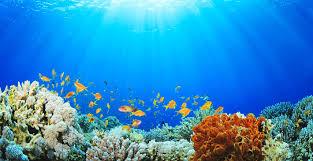 impatto zero sugli oceani