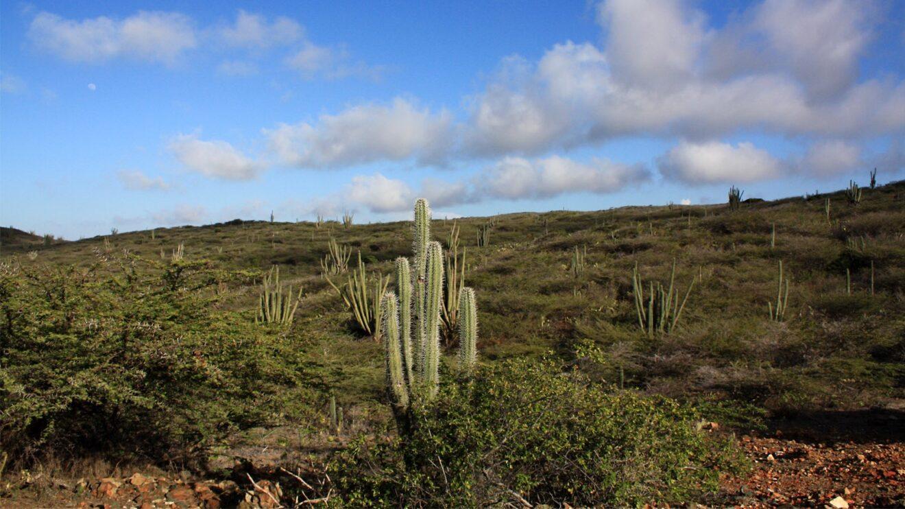 Parco Nazionale di Arikok - Aruba
